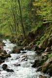 树和河 免版税库存图片