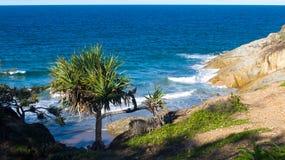 树和沿海植被反对海洋 免版税库存图片