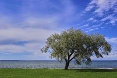 树和波罗的海 库存照片