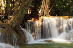 树和流动的瀑布 免版税图库摄影