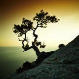 树和海日落的 蓝色克里米亚小山横向赤裸天空 图库摄影