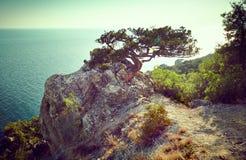 树和海日落的 蓝色克里米亚小山横向赤裸天空 库存图片