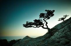 树和海日落的 蓝色克里米亚小山横向赤裸天空 库存照片