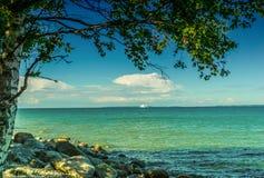 树和海视图 免版税库存图片