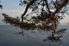 树和海 库存照片