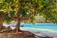 树和海 免版税库存照片