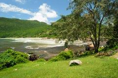 树和海 免版税图库摄影