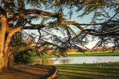 树和湖在光沐浴的冬天在太阳集合 图库摄影