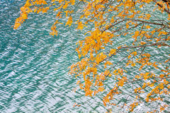 树和湖 库存图片