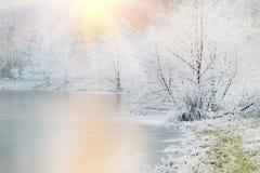 冻树和湖 免版税图库摄影
