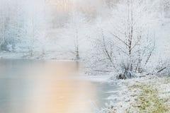冻树和湖 库存图片