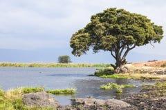 树和湖Ngorongoro火山口的在坦桑尼亚 免版税库存照片