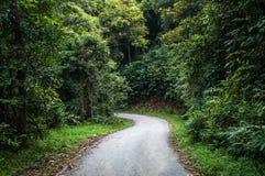 树和灌木之间的道路在森林里 免版税库存照片