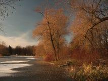 树和灌木在一个冻池塘的岸 图库摄影