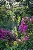 树和灌木在公园 免版税库存照片