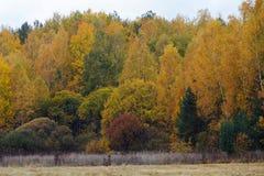 树和灌木在秋季 免版税库存图片