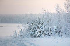 树和灌木在雪 库存照片