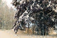 树和灌木在雪 免版税库存照片