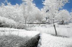 树和灌木的红外图象在错误颜色 免版税库存照片