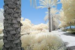 树和灌木的红外图象在错误颜色 免版税库存图片