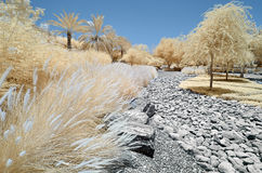 树和灌木的红外图象 免版税库存照片