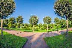 树和灌木行停放 至善论对称和几何在庭院里 透视全天相镜头 免版税库存图片