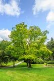 树和灌木 免版税图库摄影