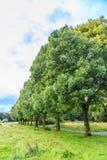 树和灌木 免版税库存图片