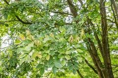 树和灌木 库存照片