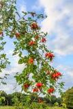 树和灌木 库存图片