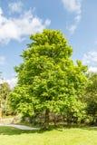 树和灌木 免版税库存照片