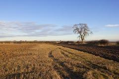 树和犁土壤 库存图片