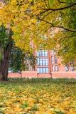 树和现代大厦在背景在秋天 免版税图库摄影