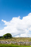 树和石块墙在农田,垂直 免版税图库摄影