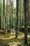 树和石头 库存图片