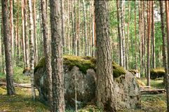 树和石头 图库摄影