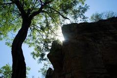 树和石头 免版税库存图片