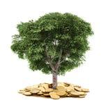 树和硬币,货币, 免版税库存图片