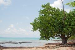 树和礁石在海岛海边在泰国 库存照片