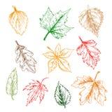 树和种植叶子铅笔剪影集合 免版税库存图片
