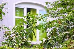 树和窗口 库存图片