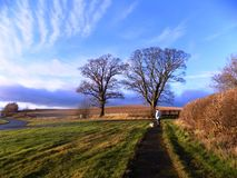 树和篱芭,在北部诺森伯兰角,英国 英国 库存照片
