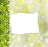 树和纸框架绿色分支在抽象背景的 免版税库存图片