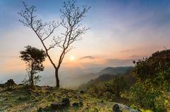 树和美好的日落 免版税库存图片