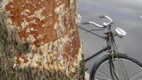 树和老自行车 免版税图库摄影