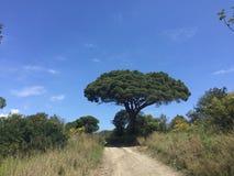 树和老路 库存图片
