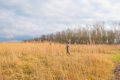 树和芦苇在一个领域在冬天 库存照片