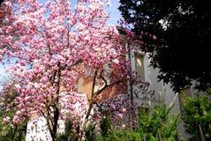 树和花在一个庭院房子里在帕多瓦在威尼托(意大利) 库存图片