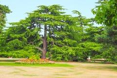 树和花在格林威治停放,伦敦在一个晴朗的夏日 图库摄影