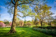 树和花在舍伍德庭院在巴尔的摩停放, Maryla 免版税图库摄影